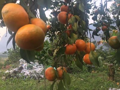 Khai mạc Ngày hội hoa quả tươi huyện Hữu Lũng 2019
